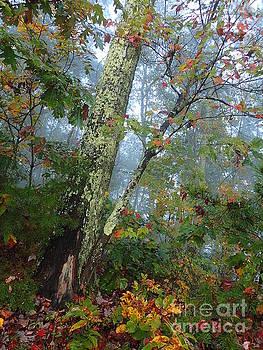 Early Fall Morning by Carol McGunagle