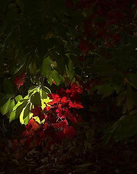 Early light by Thomas Mack