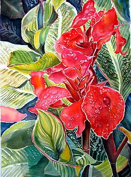 Early Morning Cannas  by Therese AbouNader