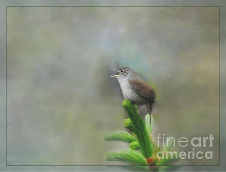 Early Morning Songbird by Brenda Bostic