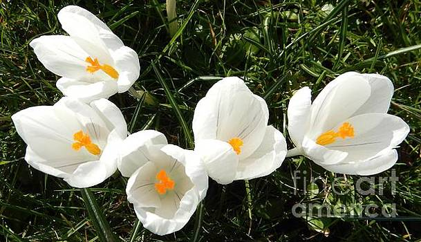Early spring blooms  by Gary Bridger
