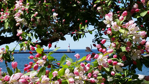 Early Spring Blossoms at the Waterfront by Wendy Shoults