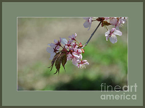 Early Spring Blossoms by Elaine Manley