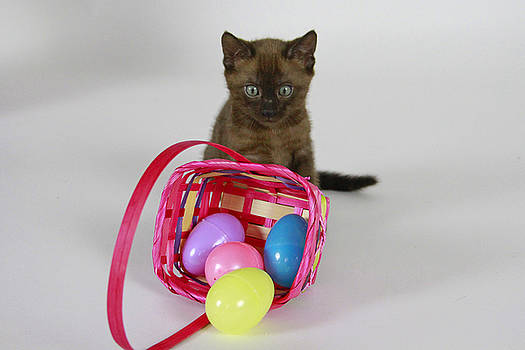Easter Kitten by Shoal Hollingsworth
