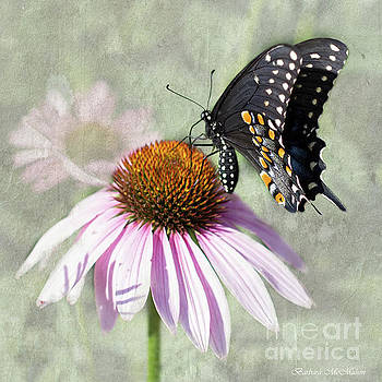 Eastern Black Swallowtail and Echinacea  by Barbara McMahon