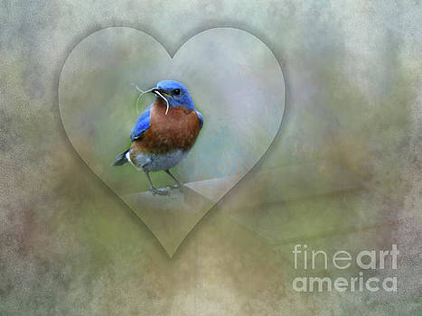 Eastern Bluebird by Brenda Bostic