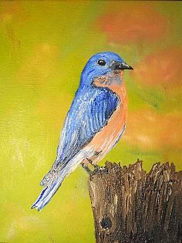 Eastern Bluebird by James Higgins