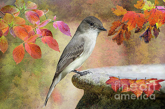 Eastern Phoebe In Autumn by Bonnie Barry