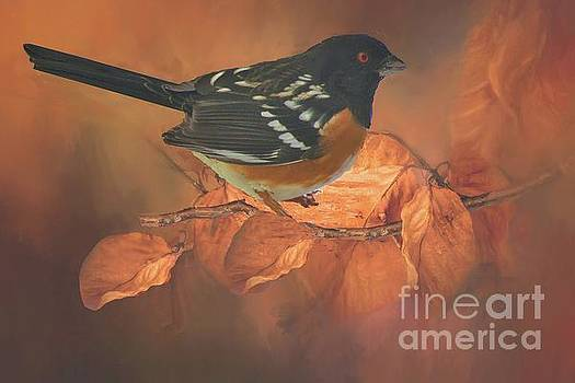Spotted Towhee in Autumn by Janette Boyd