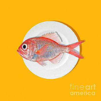 Wingsdomain Art and Photography - Eat Fish ora
