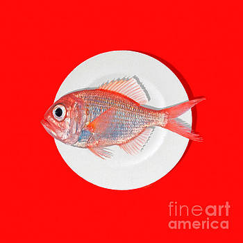 Wingsdomain Art and Photography - Eat Fish red