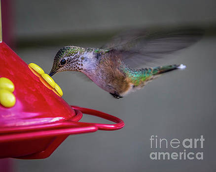 Eating On The Fly by Jon Burch Photography