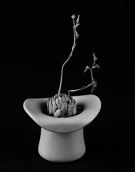 Echeveria and hat  by Catherine Lau