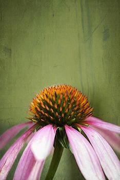 Echinacea Bloom by Di Kerpan