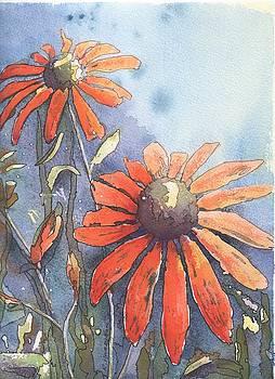 Echinacea by Robynne Hardison
