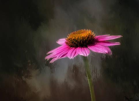 Kim Hojnacki - Echinnacea Flower Essence