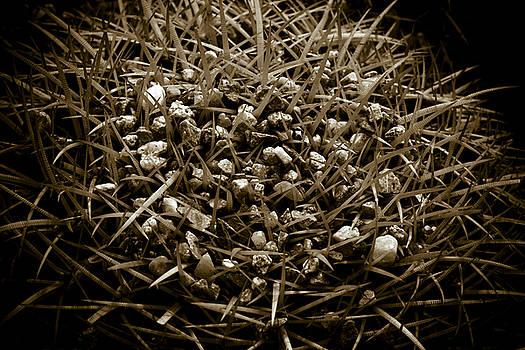 Echinocactus Grusonii by Frank Tschakert