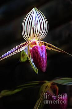 Ecuador Loves Orchids II by Al Bourassa