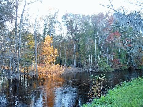 Edisto River by Kay Gilley