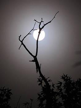 Shane Brumfield - Eerie Moon