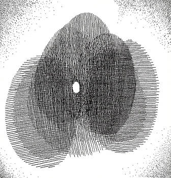 Egg Drawing 119717 by Phil Burns