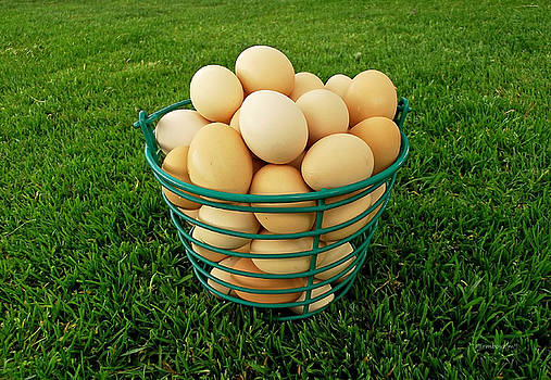 Eggs in a Basket by Harold Zimmer