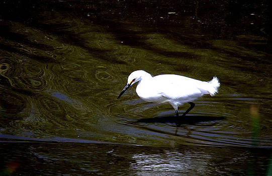 Egret at the Pond by Kathleen Storey
