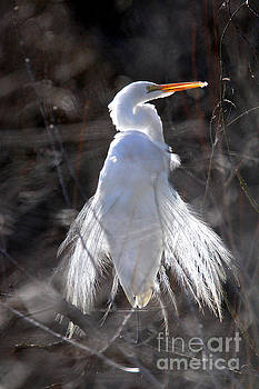 Egret by Irina Hays