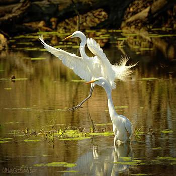 Egret Landing by LeeAnn McLaneGoetz McLaneGoetzStudioLLCcom
