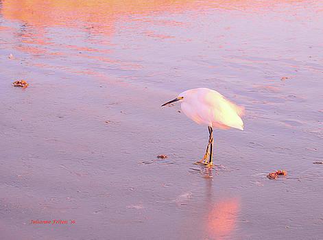 Egret morning 10-26-16 by Julianne Felton