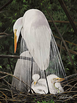 Egret Mother and Chicks by Bill Dunkley