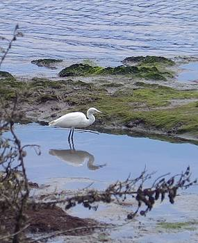 Egret Reflections by Jan Moore