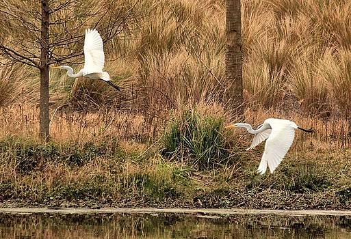 Rosanne Jordan - Egrets in Flight