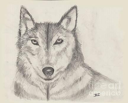 El Lobo by David Jackson