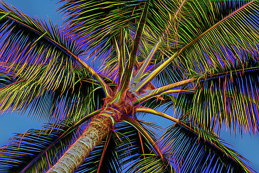 Electric Palm by Kelley King