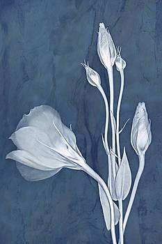 Elegance in Slate by Leda Robertson