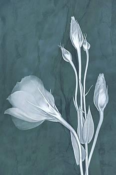 Elegance in Teal by Leda Robertson