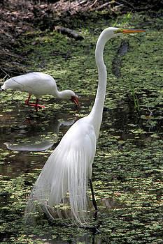 Elegant Egret by Doris Potter