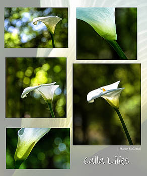 Elegant Translucent Lilies by Marion McCristall