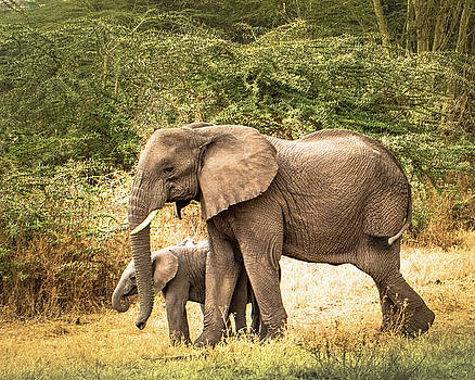 Elephant and Calf by Janis Knight