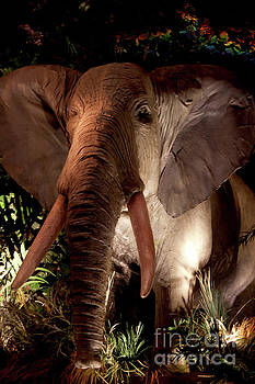 Elephant at Rainforest Cafe by Ivete Basso Photography