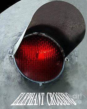 Elephant Crossing 01 by Geordie Gardiner