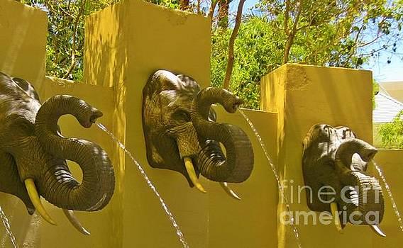 John Malone - Elephant Fountain One
