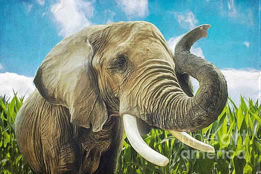 Elephant in the cornfield by Angela Doelling AD DESIGN Photo and PhotoArt