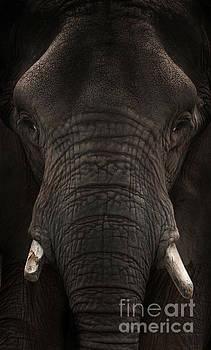 Elephant by Lynn Jackson