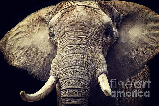 Angela Doelling AD DESIGN Photo and PhotoArt - Elephant portrait