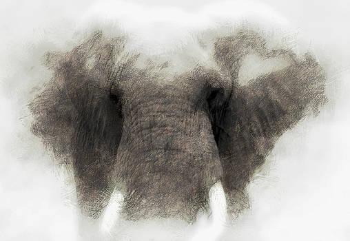 Elephant portrait by John Stuart Webbstock