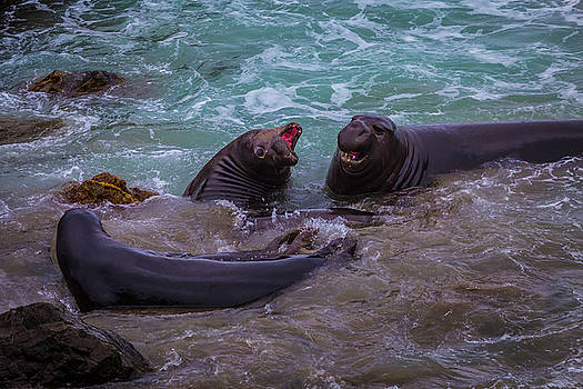 Elephant Seals In The Surf by Garry Gay