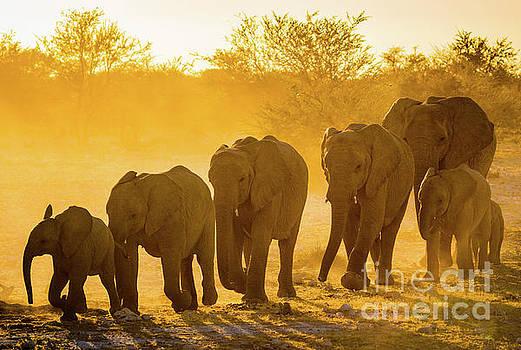 Elephant Sunset by Inge Johnsson