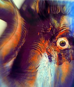 Elephant Zoom by Fania Simon